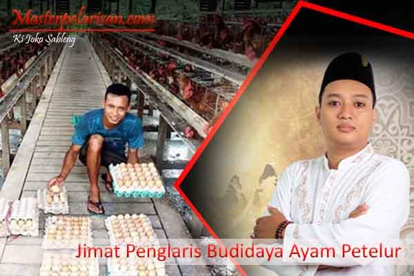 Jimat Penglaris Budidaya Ayam Petelur